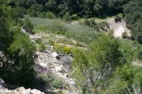 Pedrera s'Antiga any 2012 - Renaturalitzada de manera natural