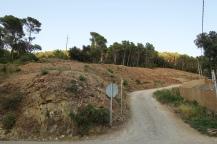 Tala d'arbres per procedir amb la construcció dels Jardins Sa Riera Living Agost 2018