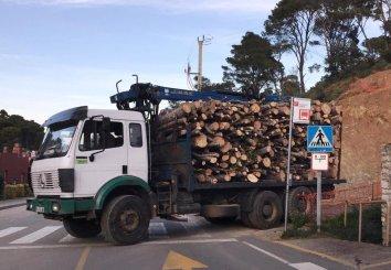 TalInici tala d'arbres